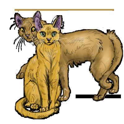 Коты воители мёдобока