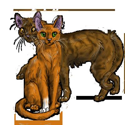Коты воители арты белки