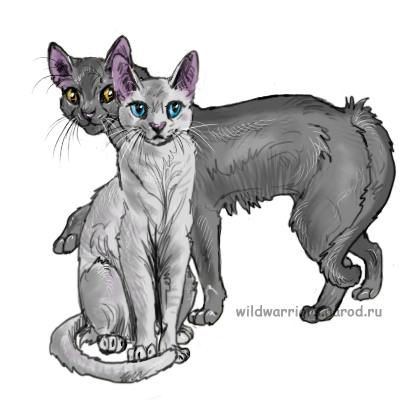 картинки коты воители крутобок и серебрянка