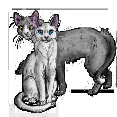Арты котов воителей пара