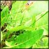 http://wildwarriors.narod.ru/articles/herbs/sorrel.jpg
