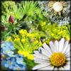 http://wildwarriors.narod.ru/articles/herbs/traveler_herbs.jpg