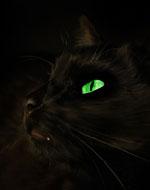 http://wildwarriors.narod.ru/characters/images/shadowclan/shadowstar.jpg