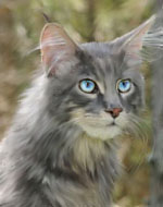 http://wildwarriors.narod.ru/characters/images/thunderclan/goosefeather.jpg