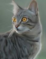 Герои книг котов воителей