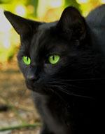 Описание героев из котов воителей
