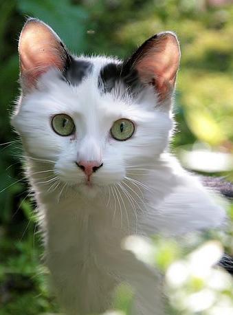 Коты воители лоскут