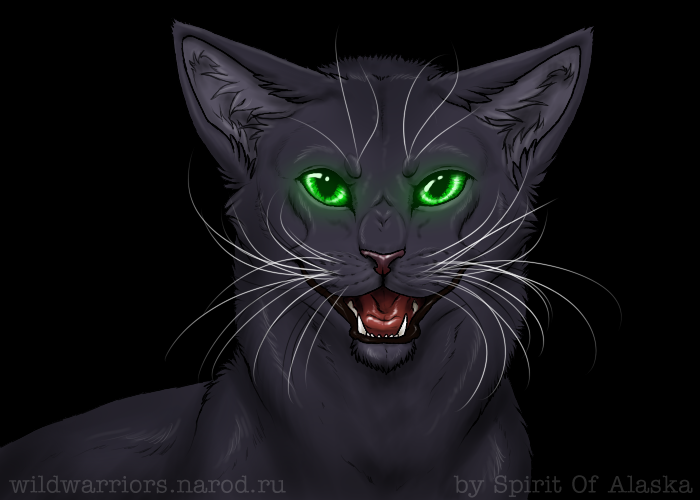 Кошка красивая коты воители