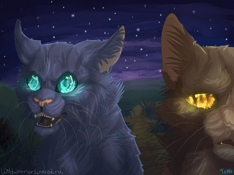 Коты воители испытание