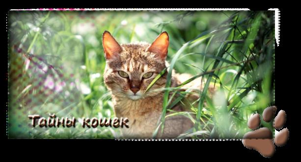 Рассказы и про котов кошек и