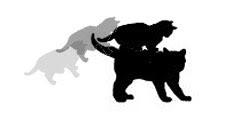 http://wildwarriors.narod.ru/wallpapers/fightingskills/6.jpg