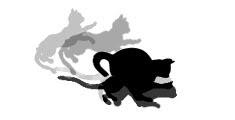 http://wildwarriors.narod.ru/wallpapers/fightingskills/9.jpg