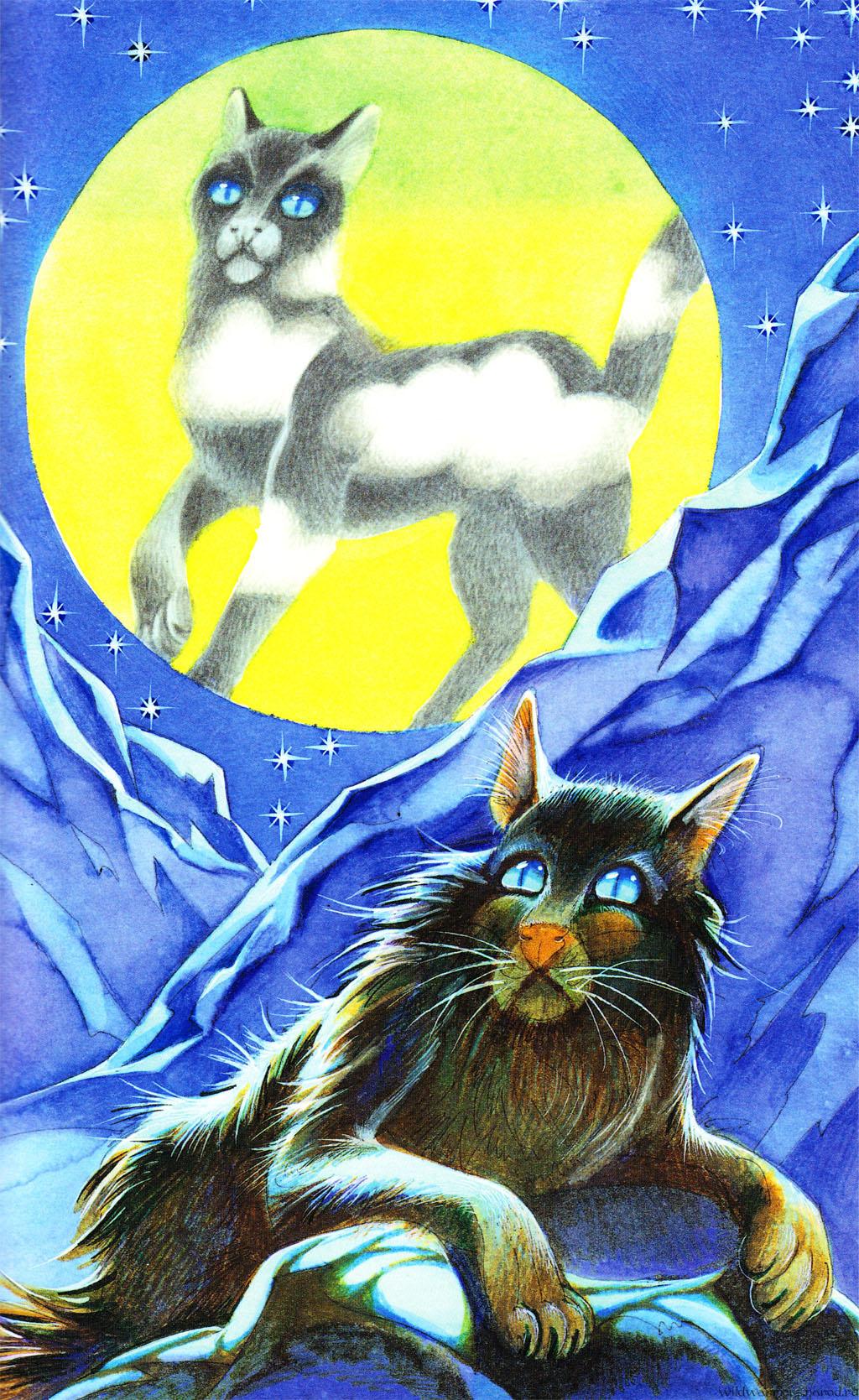 Коты картинки из символов и - 3ece