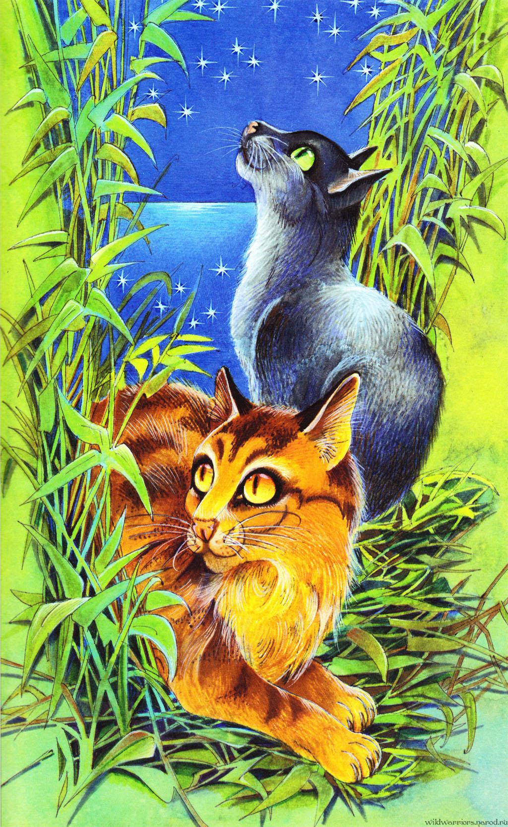 Скачать коты воители закон племен